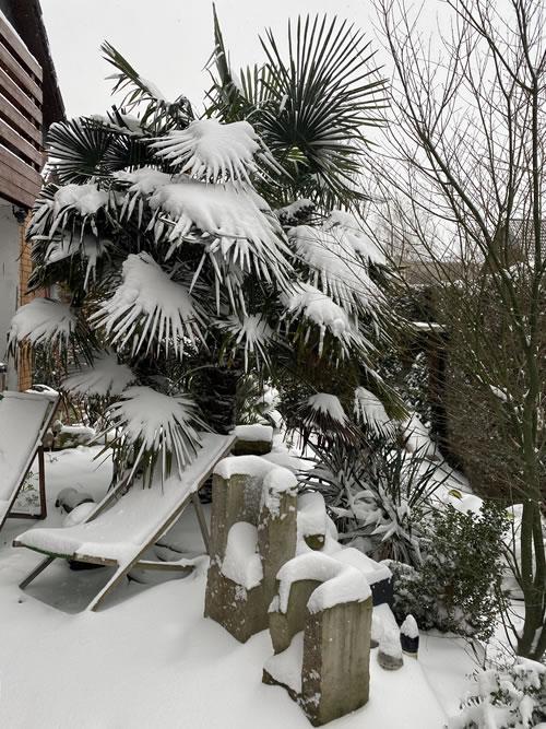 Palmenland-Hannover - Plamen im Winter