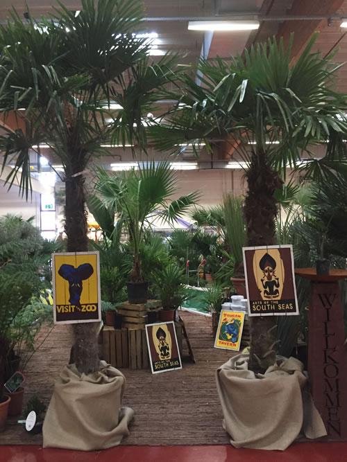 Palmenland-Hannover Palmen kaufen