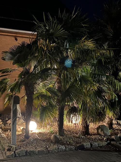 Palmenland-Hannover Palmen online kaufen